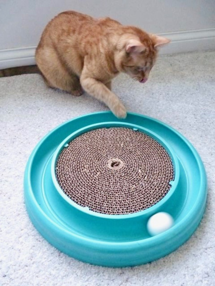 The Bergan TurboScratcher is a great option for both scratching and playing, which keeps cats away from the furniture.