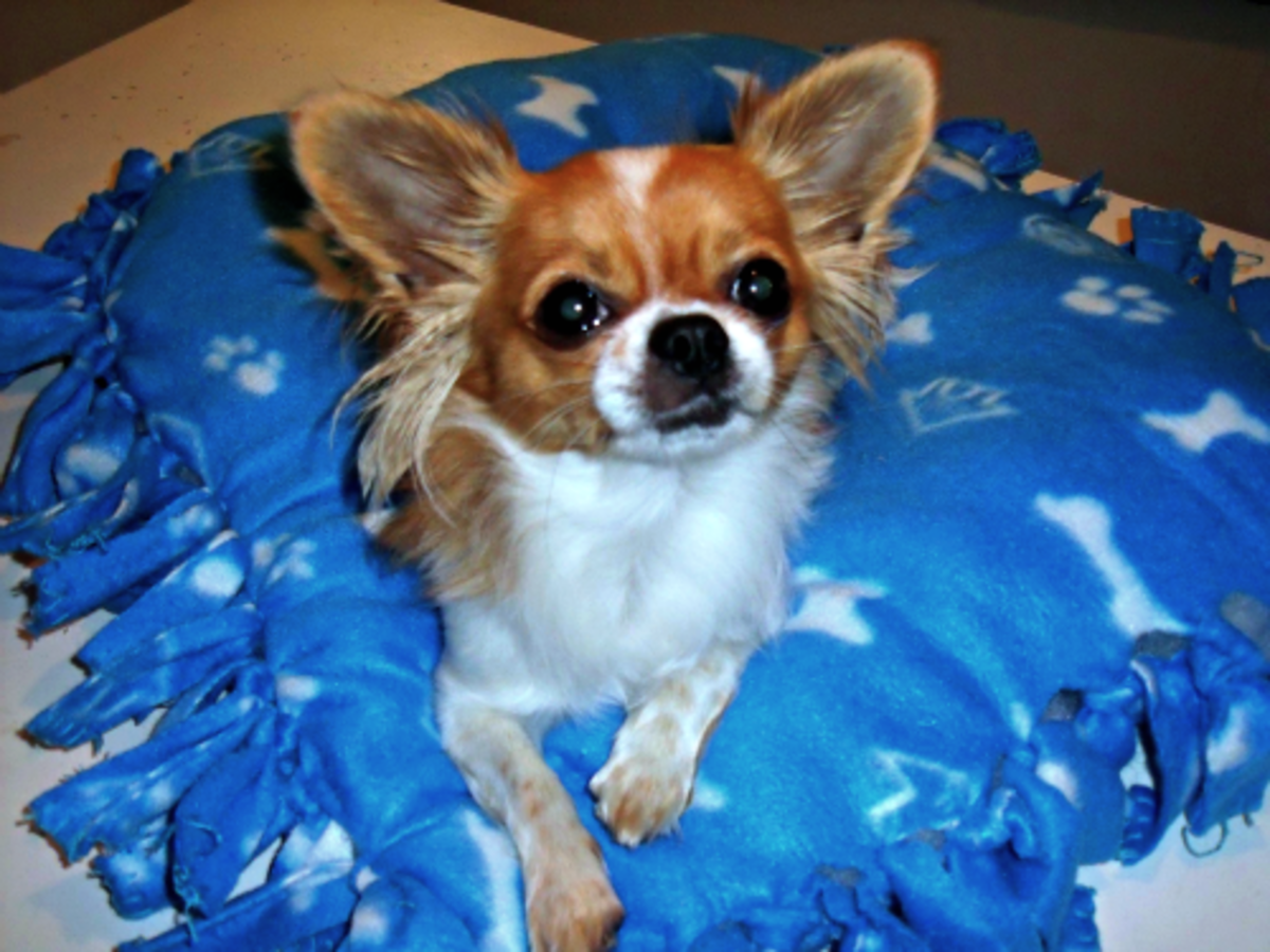 Gizmo posing on his bed.
