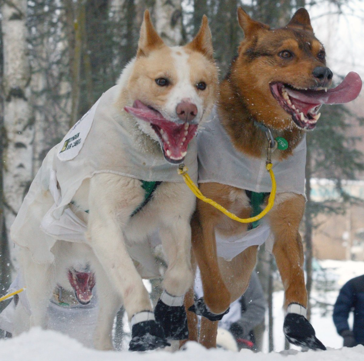 I love this photo of happy team pups.