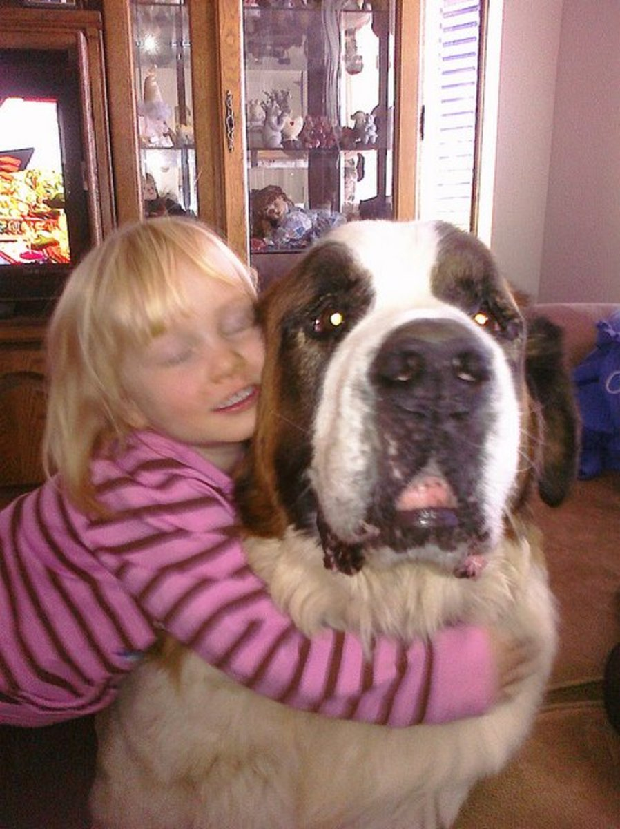 St. Bernards are good with kids.