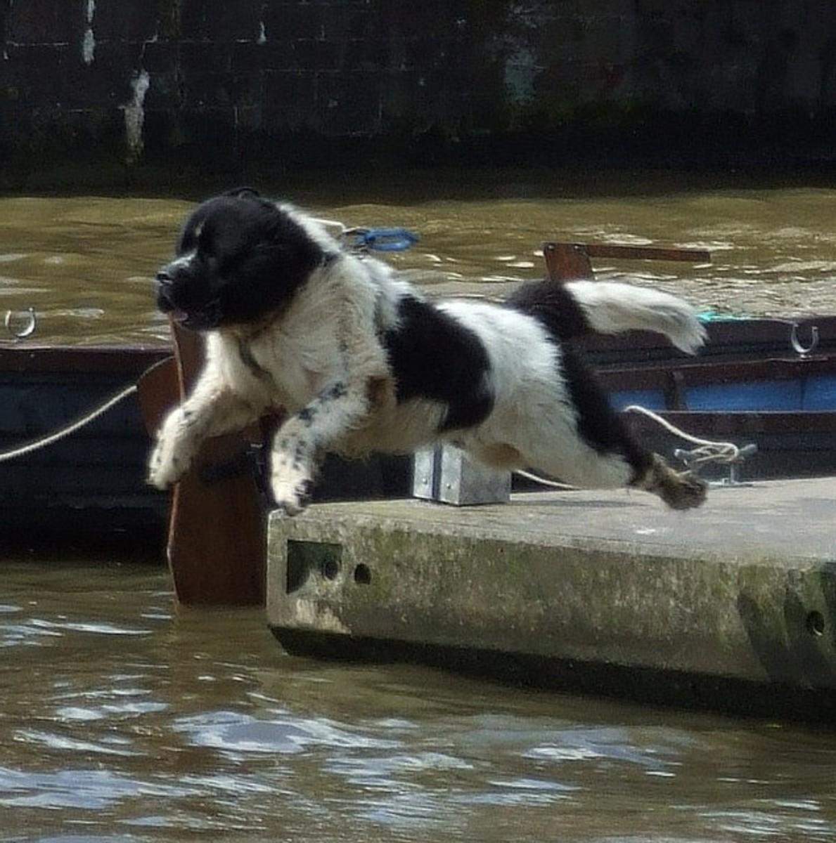 Five Best Giant Dog Breeds