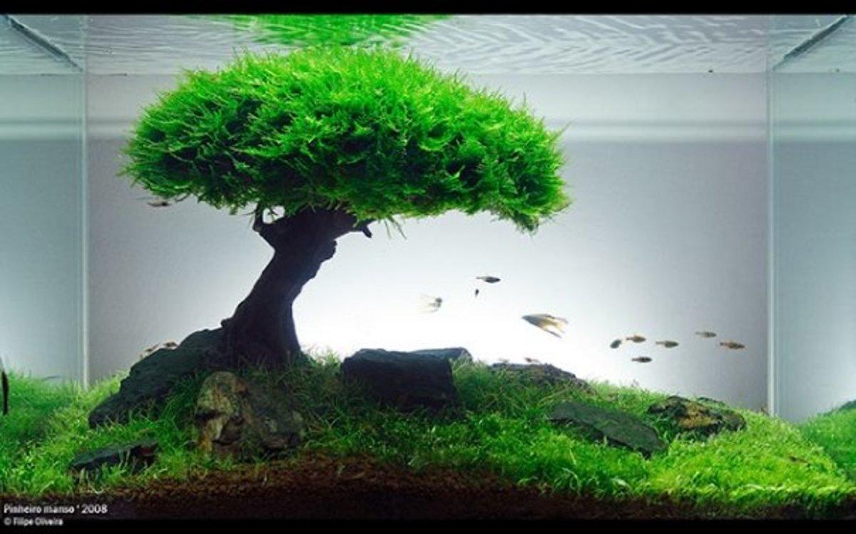 the-basics-of-a-planted-aquarium