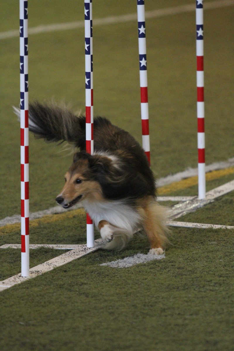 goals-verses-dreams-how-to-set-goals-for-agility-and-other-canine-sports