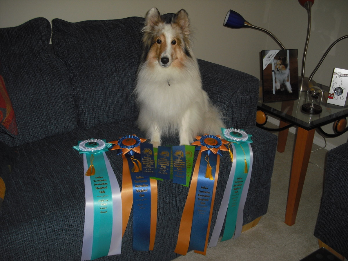 Two time high-in-trial winner in obedience.  Sometimes dreams you never dreamed come true!!