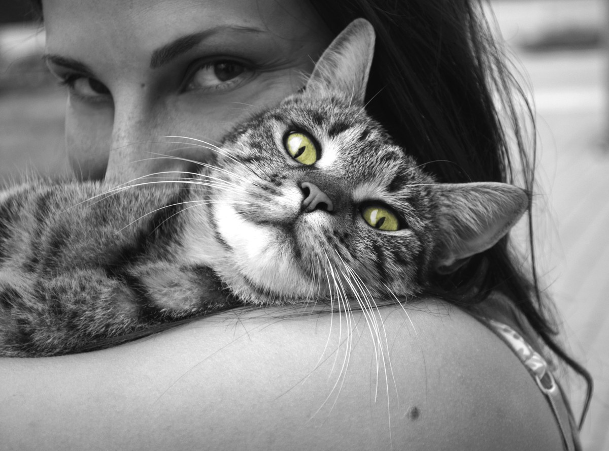 Pets can help alleviate stress in your daily life.