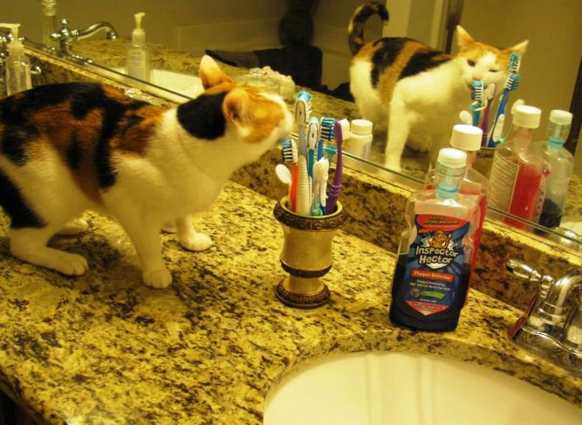 I've learned not to keep toothbrushes on the counter for this reason.  Stella brushes her own teeth.  Caught in the act!
