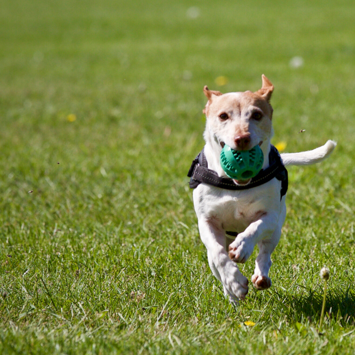 "Many dogs will find their own forms of entertainment, which often leads to ""behavior problems."""