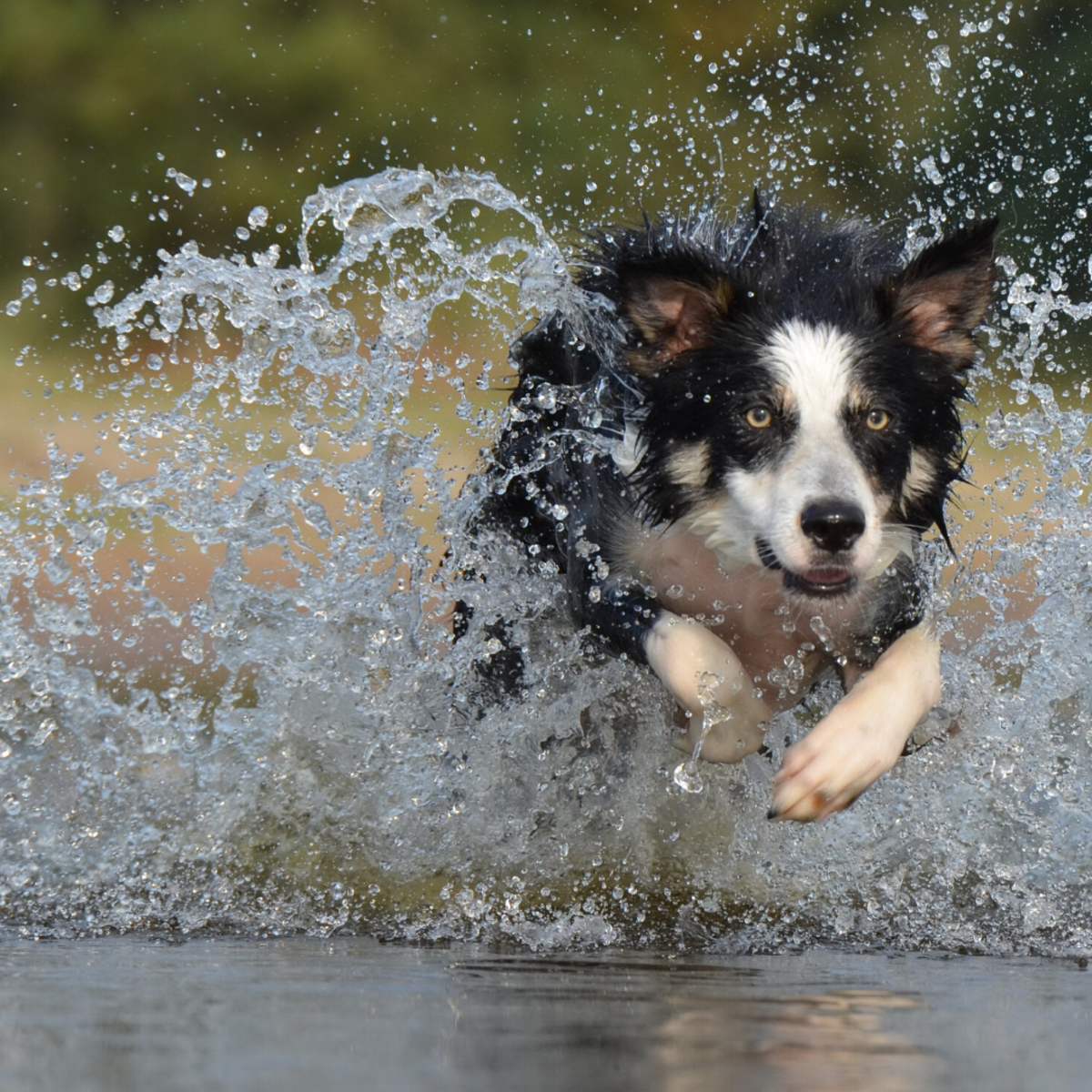 Exercise can help a high-strung dog.