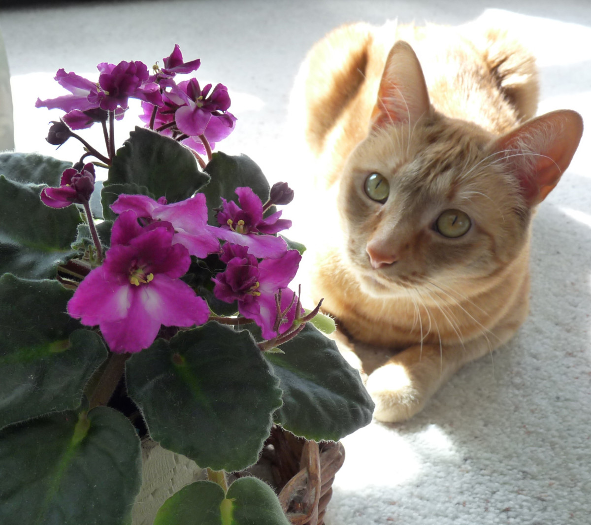 Learn how to choose cat-friendly plants to keep your cat safe.
