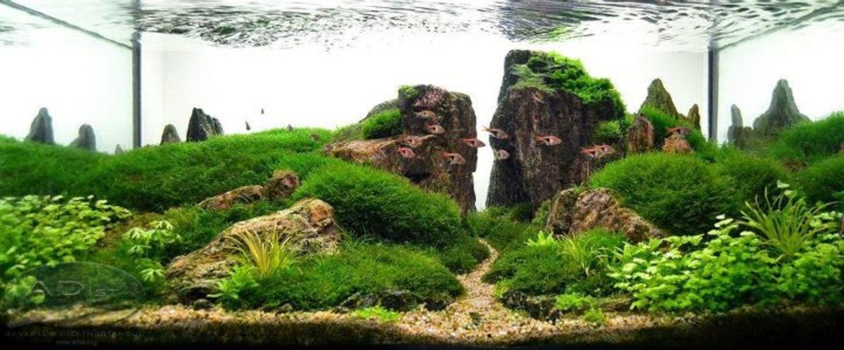 Adding plants to your aquarium can make it even more beautiful and some designs can get pretty elaborate.