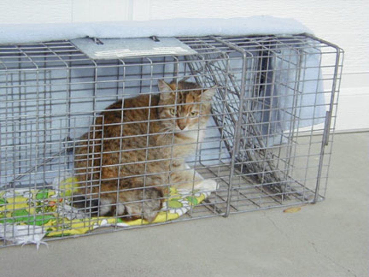 Humane traps may be needed if your cat is scared or needs to be captured quickly.