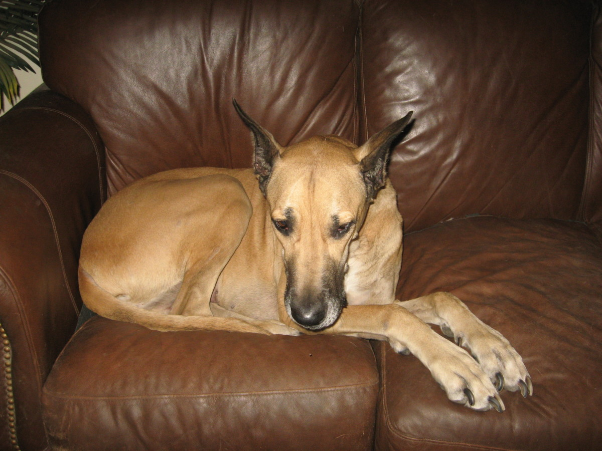 Fleas can hide in furniture, carpet, bedding—anywhere your dog frequents.