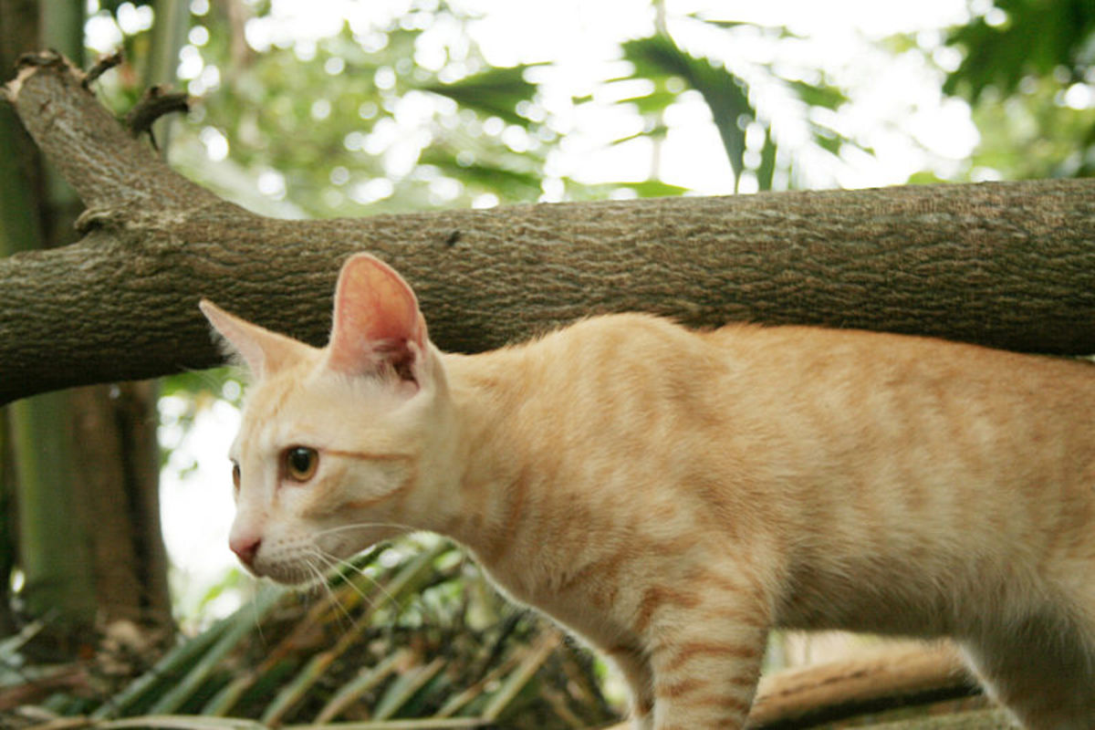 Cats are very wary and have a strong sense of danger in new situations.