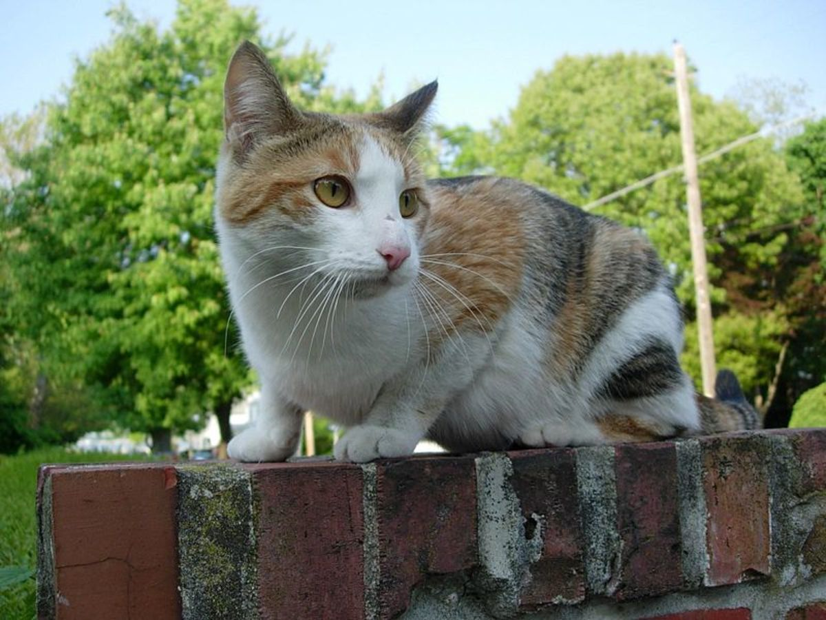 If the stray cat is young, he or she will probably be easier to capture.