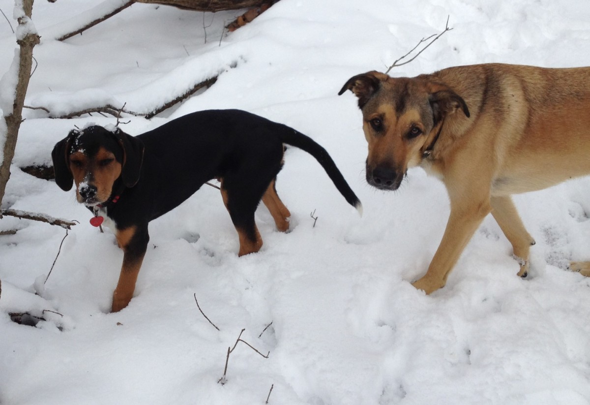 Enjoying a romp in the snow at Alum Creek State Park.