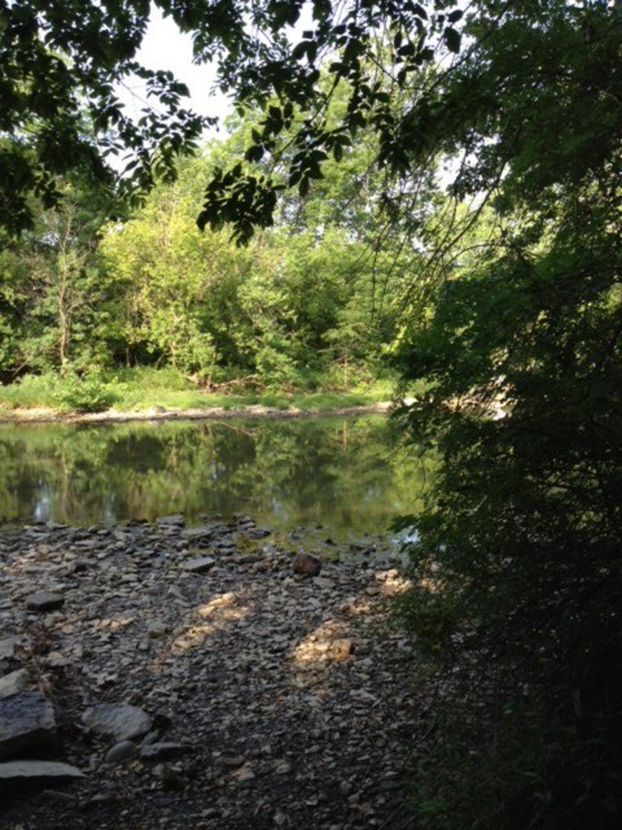 Five Great Places to Hike With Your Dog Near Columbus, Ohio