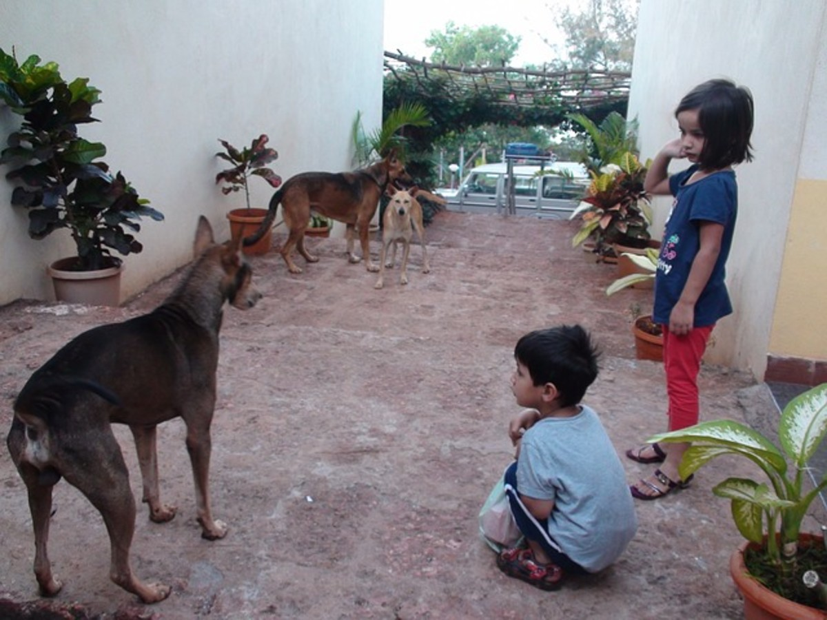 Pariah dogs in India are used to being around children.