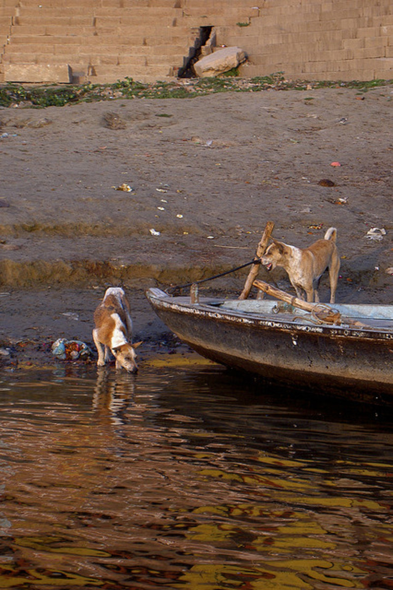 Pariah dogs can be found most places in India.