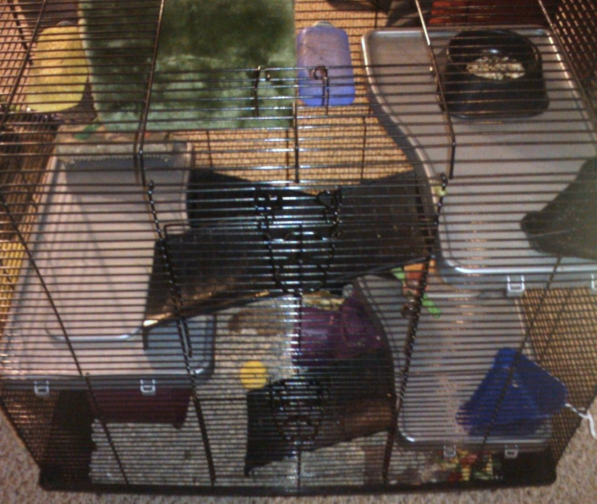 A multilevel cage requires more spot-cleaning on a daily basis.