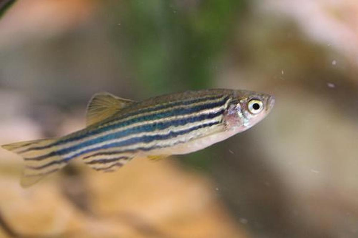 Danios make good first fish.