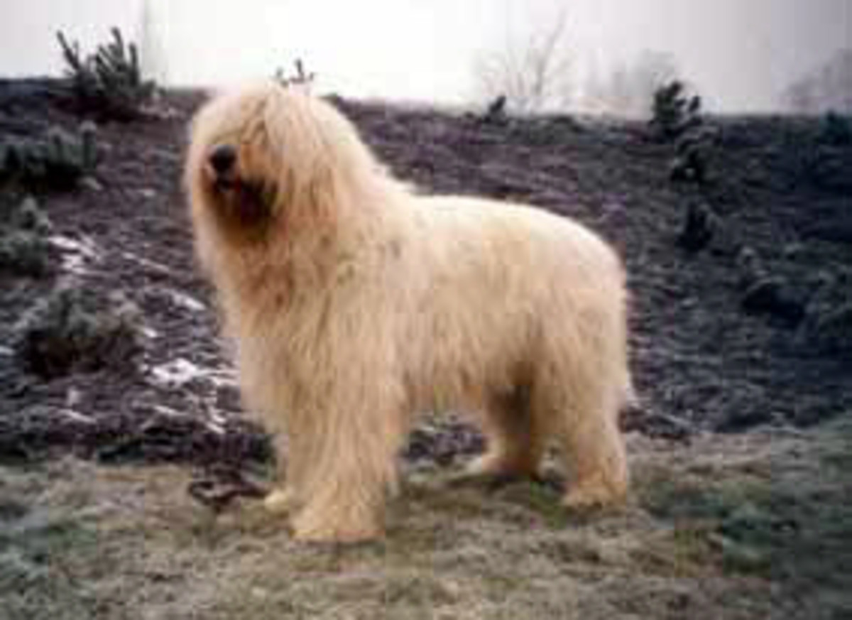 five-dog-breeds-from-russia