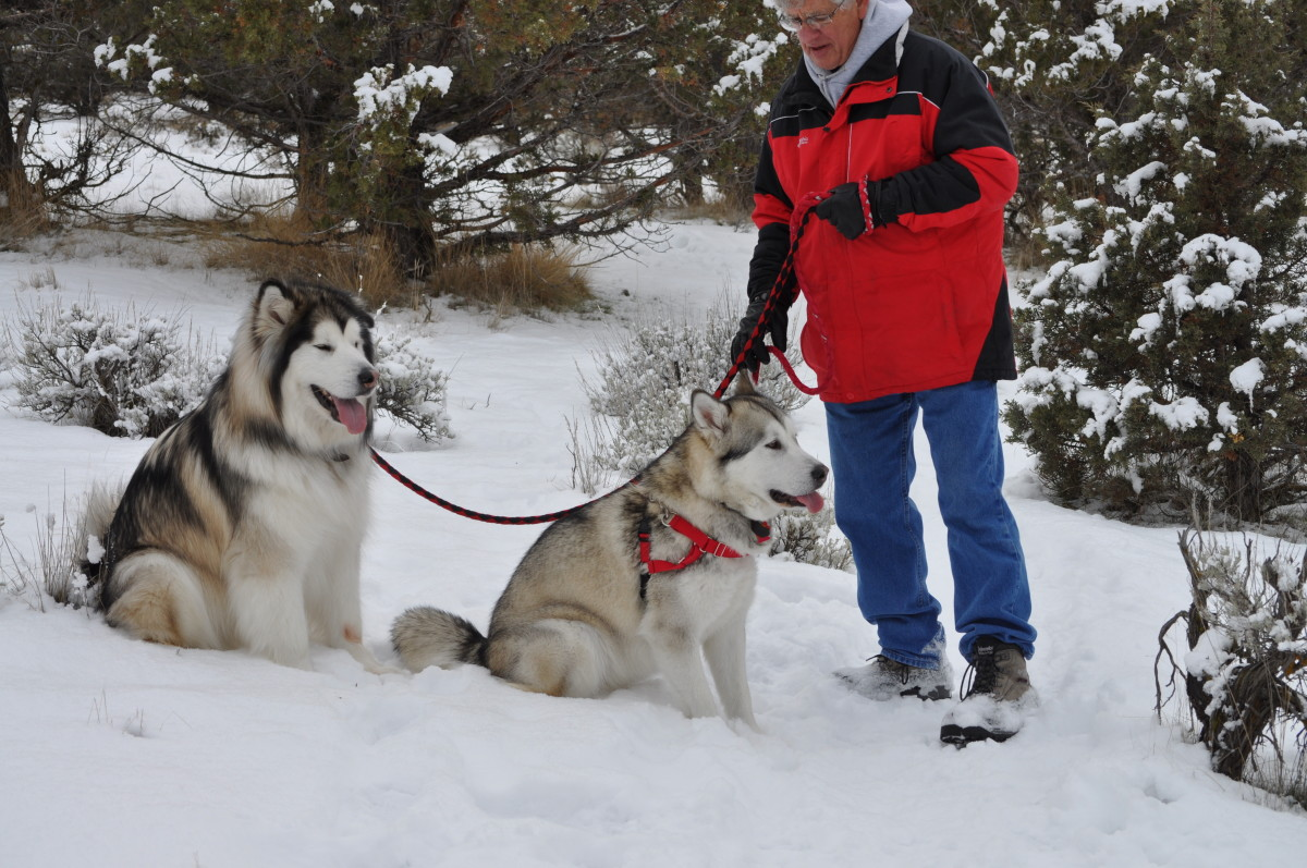 Exercise dogs no matter what time of year and eliminate destructive behaviors.