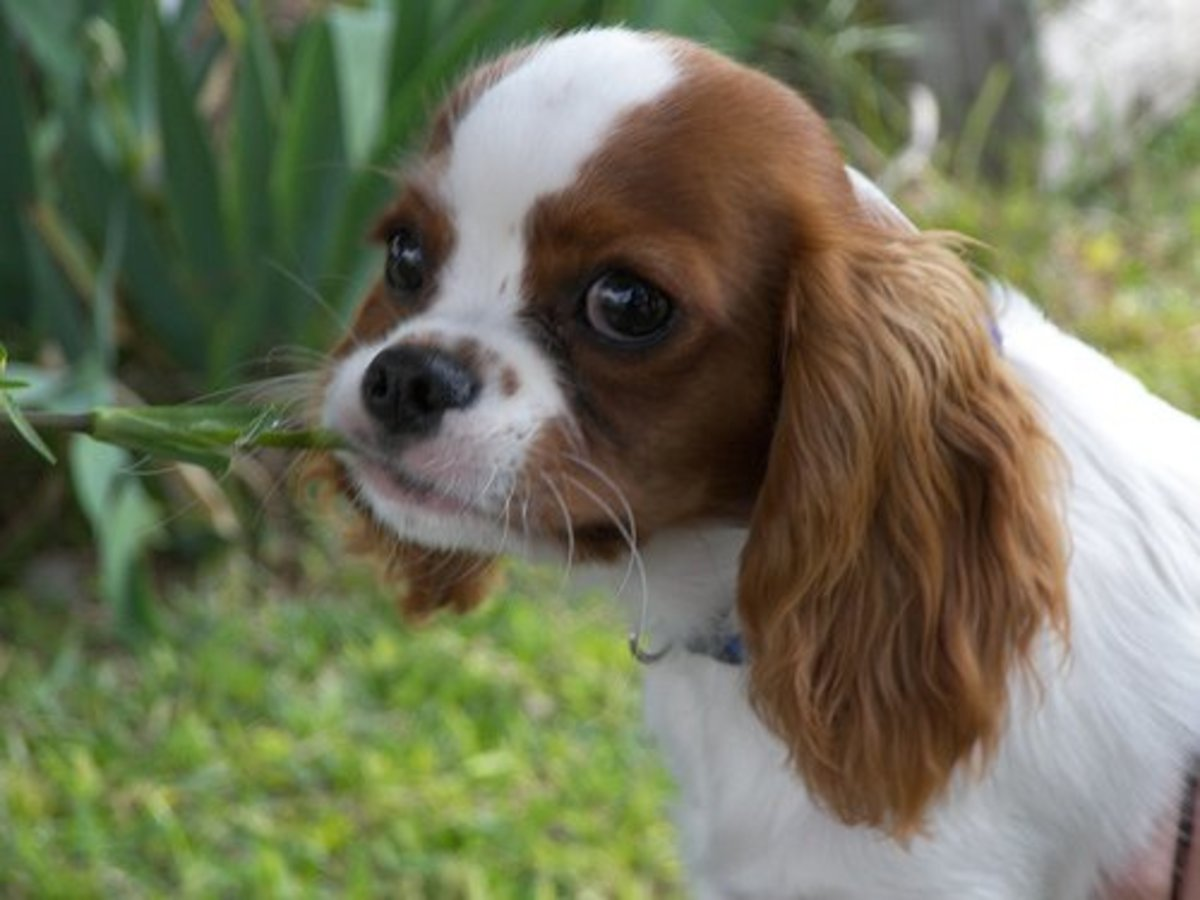 If left to their own devices, dogs will even eat plants--which can be disastrous.