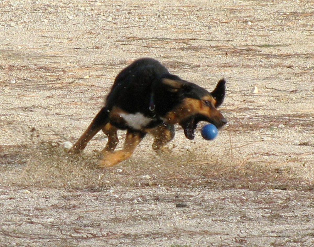 Even playing catch with your dog helps exercise your dog.