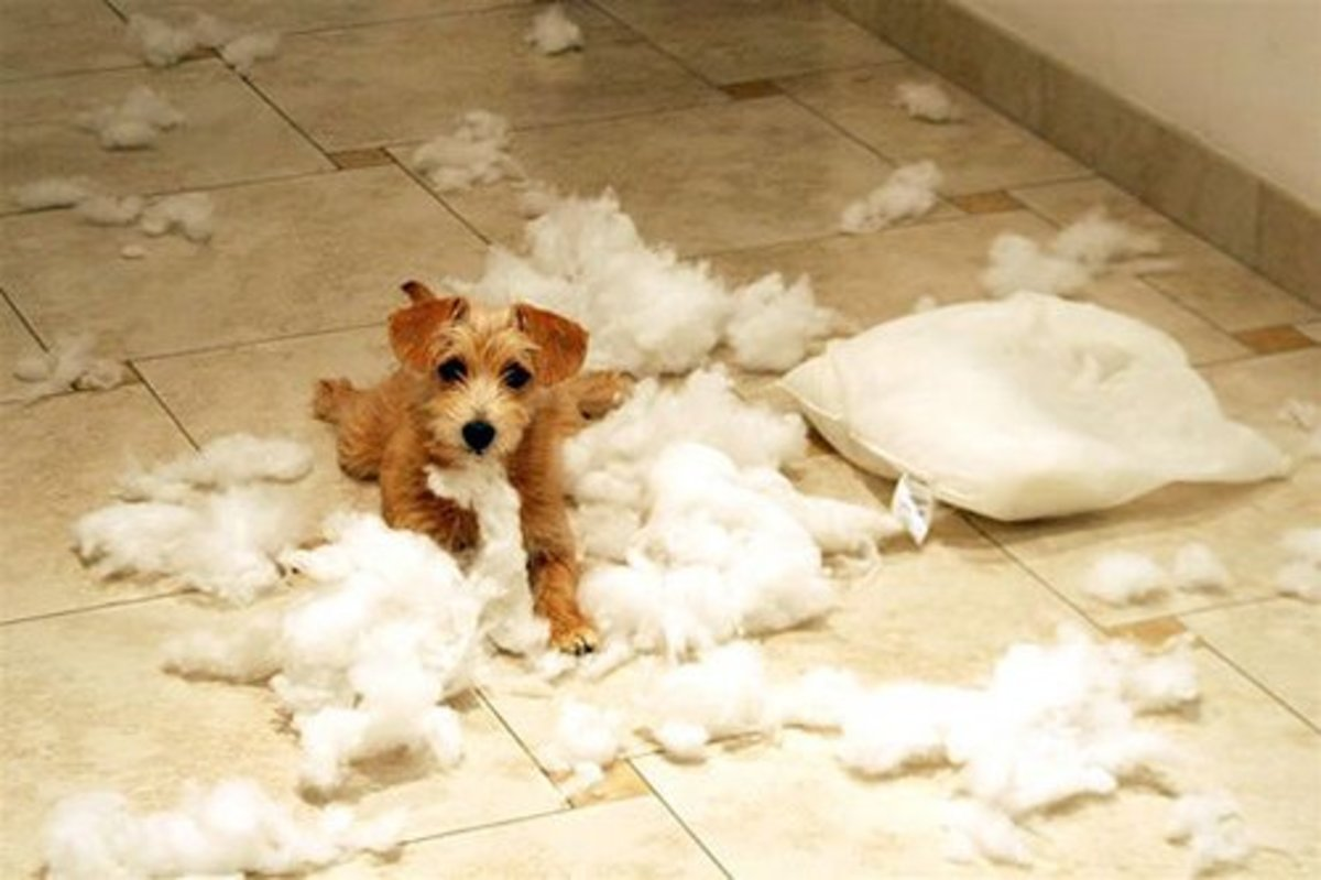 Even the most well behaved dog can have destructive moments.
