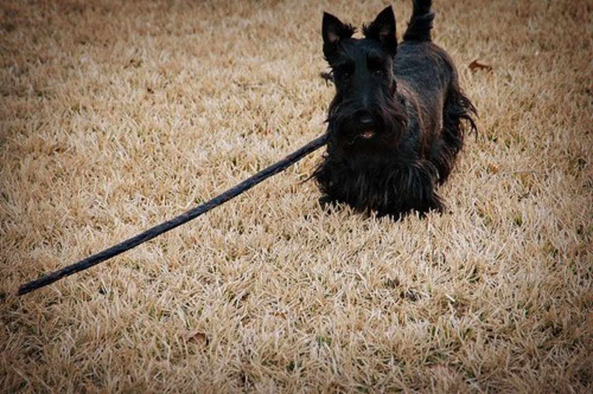 Most dogs will amuse themselves any way they can--even with a huge stick.