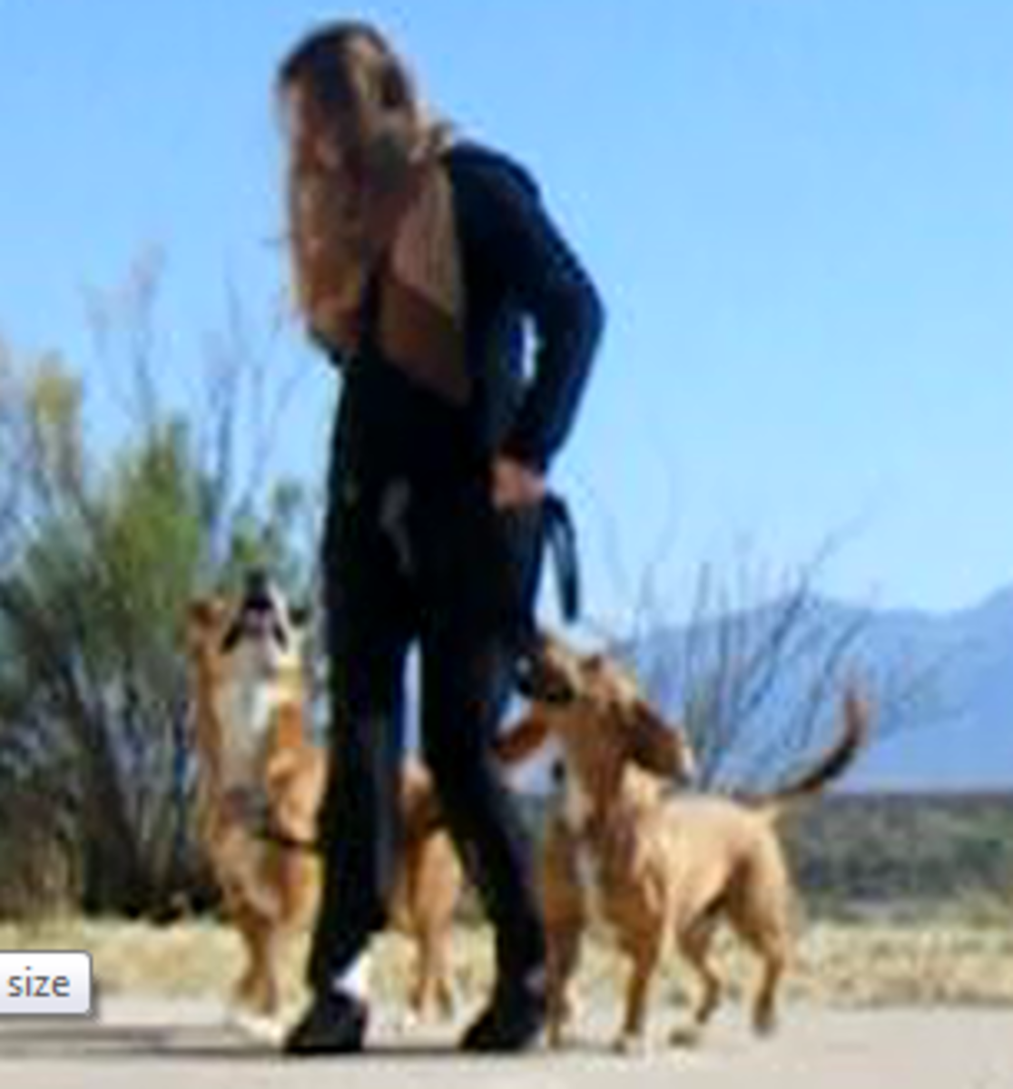 """Defeat the Dog opposition reflex by training loose leash walking with my """"sticky feet"""" method."""