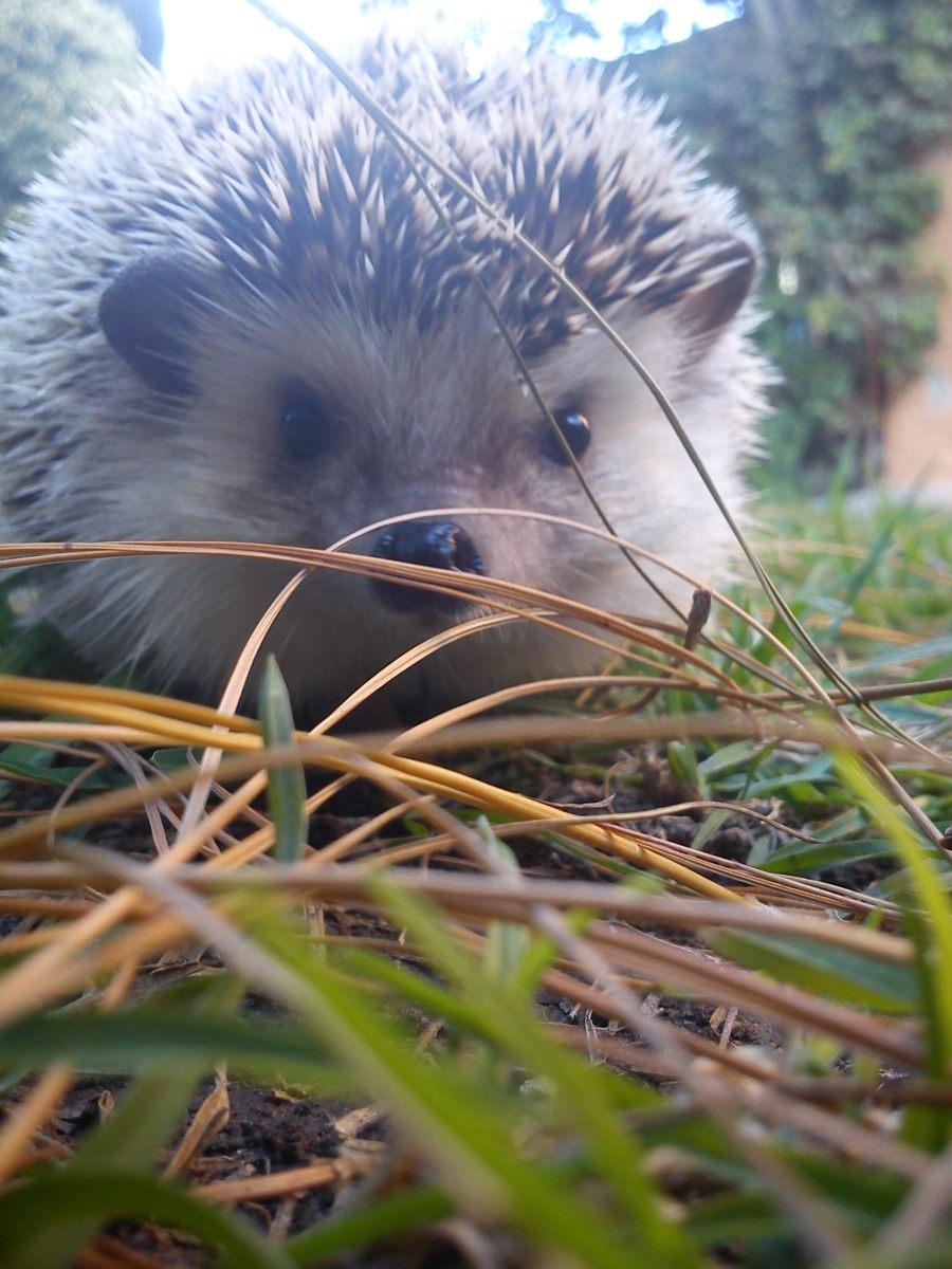Hedgehogs enjoy supervised exploring.