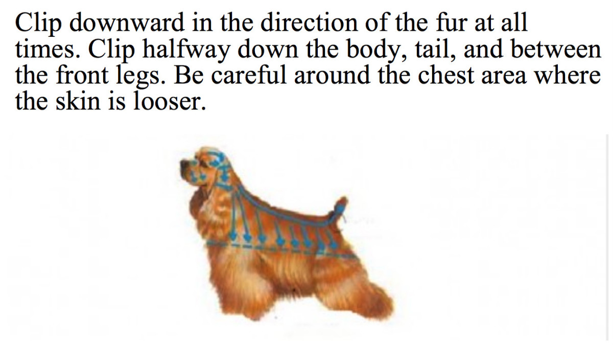 Follow the blue arrows to clip downward and in the direction of the fur at all times.