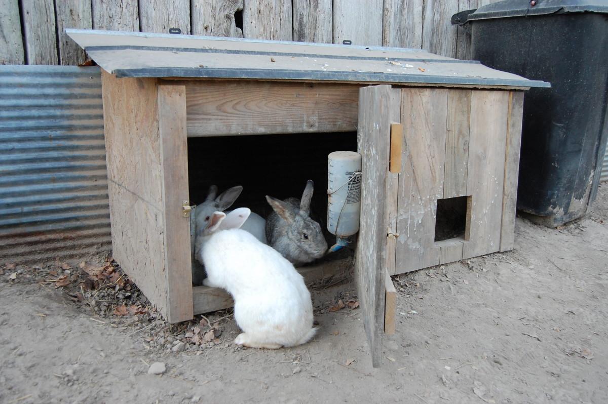 Rabbit house with access door open.