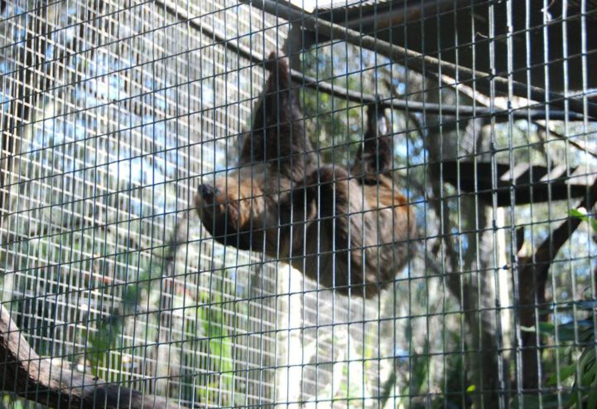 Sloths have large caging requirements