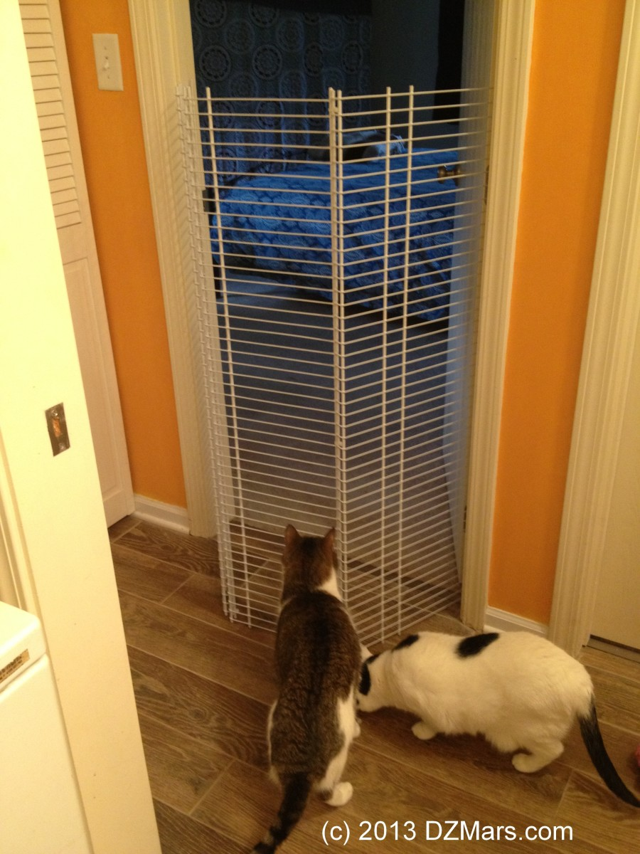 Foiled by the beautiful homemade cat gate!
