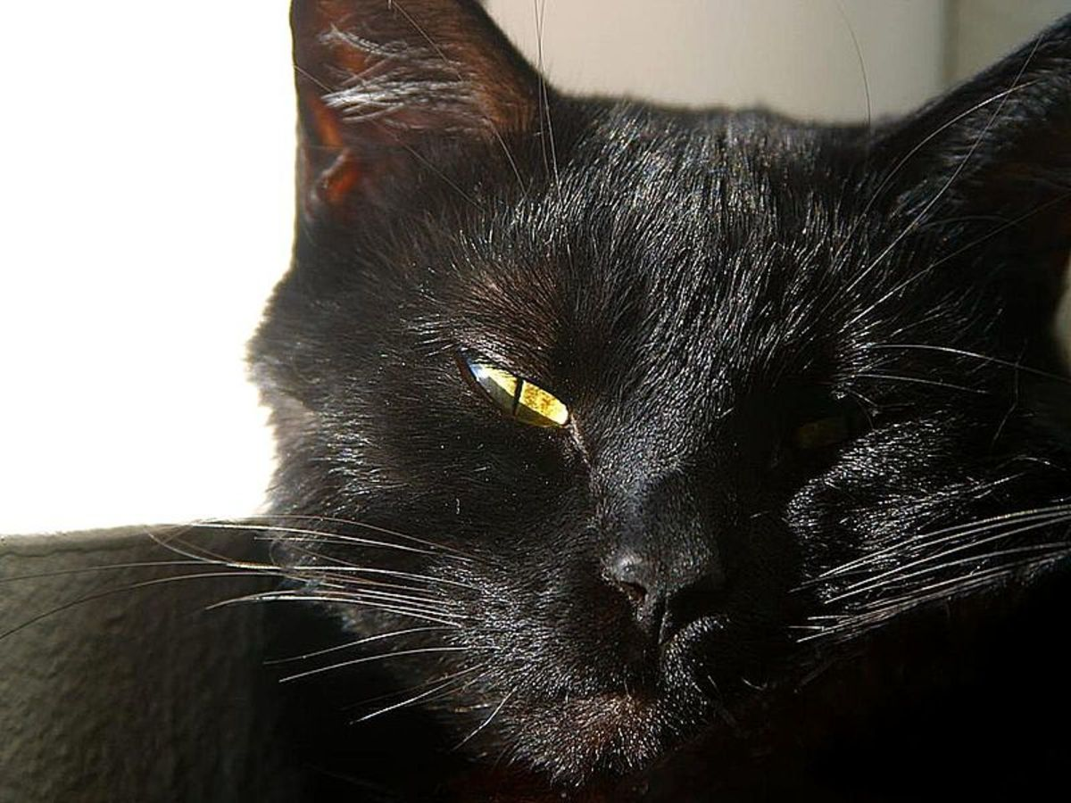 Loki might be a good name for a black cat.