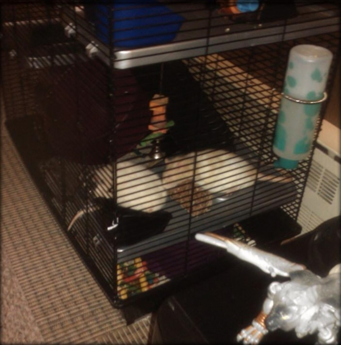Know the signs of overheated rats (like sprawling out in the cage) and have a solution.