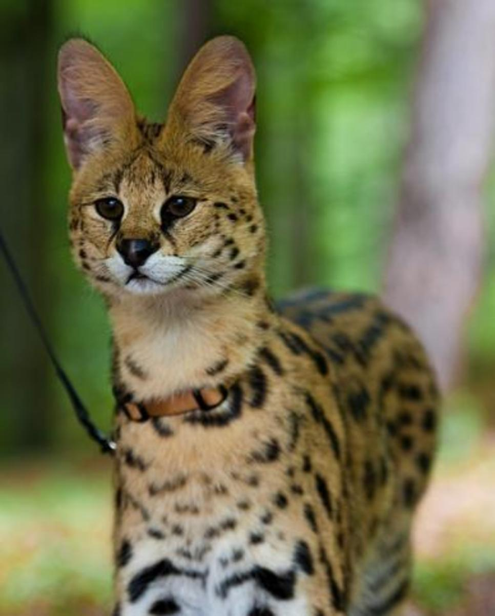 Which Exotic Pets Are Legal in the United States? | PetHelpful