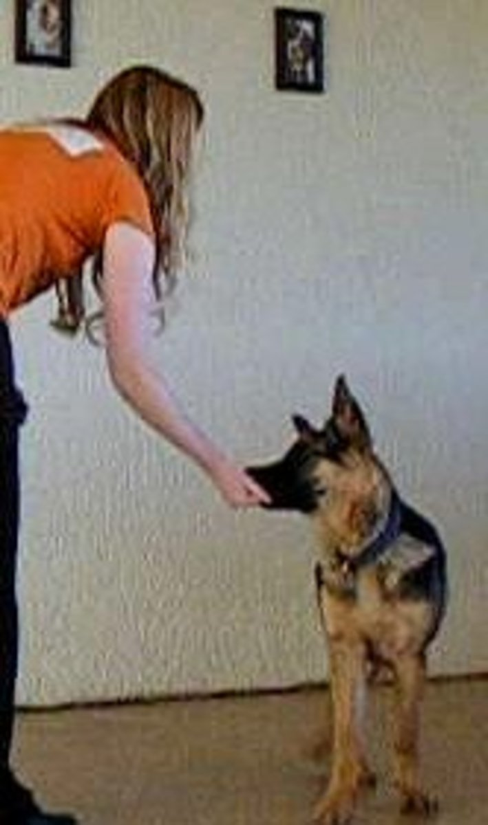 german shepherd pup bite inhibition training