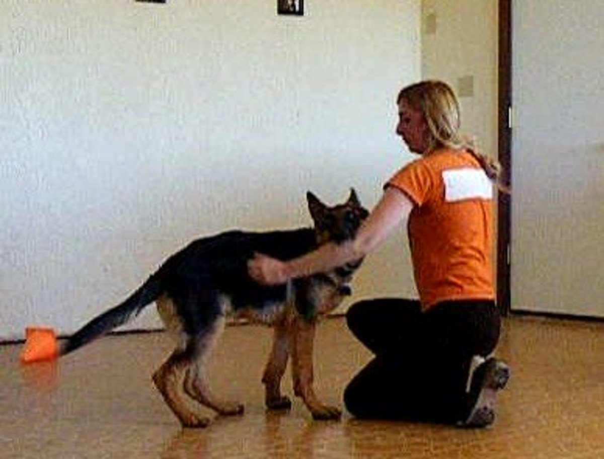 German shepherd bite inhibition