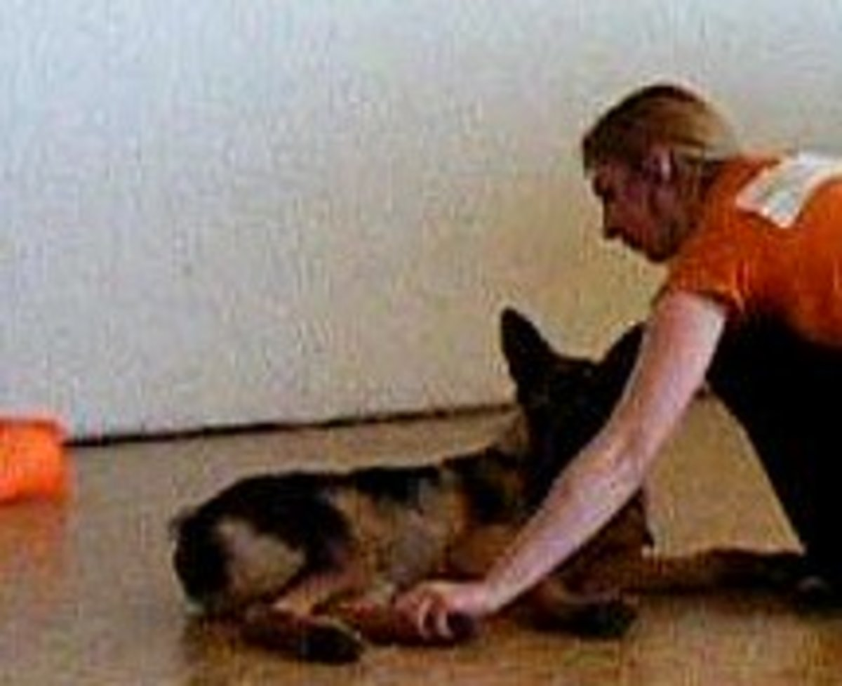 The touch game: I touch the pup's feet and immediately give a treat.