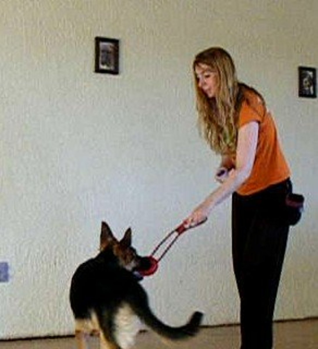 Teaching German shepherd pups bite inhibition