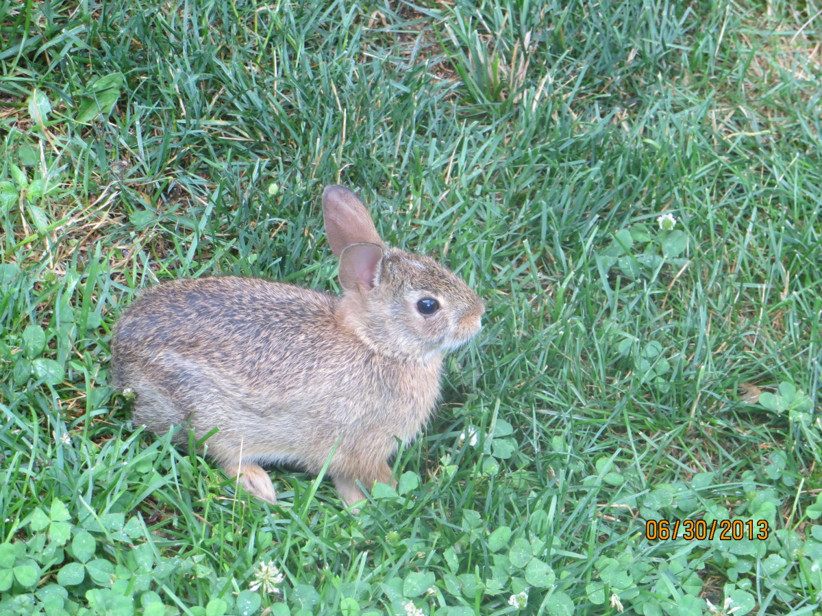 The cute little bunny rabbit that gave Buzz the mange.