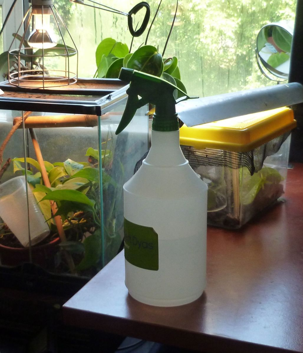 The water spray bottle is your friend when raising geckos.