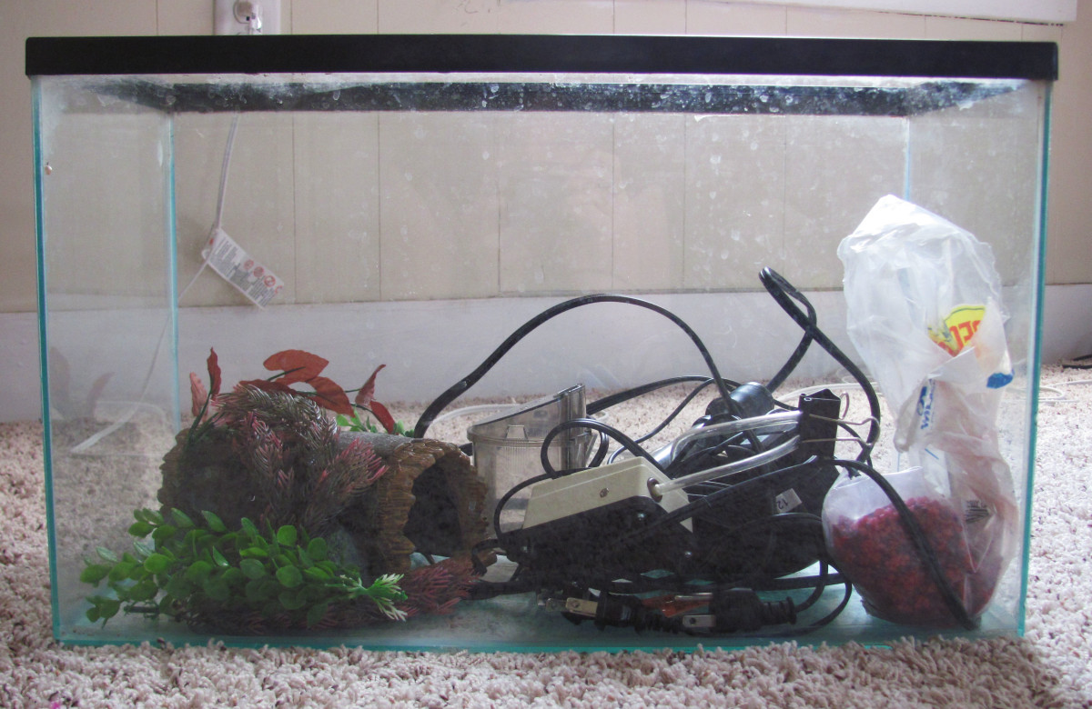 Consider what elements you want in your tank.