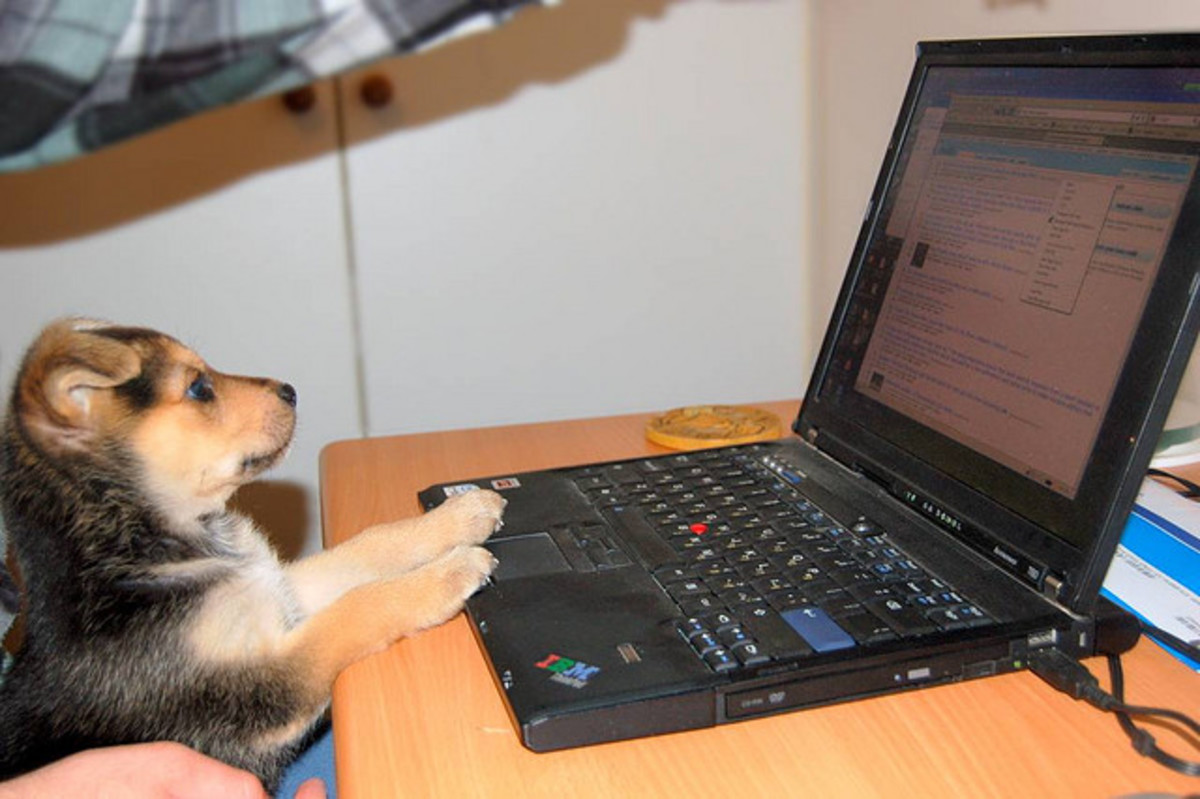 Some dogs learn to work in alternative media.