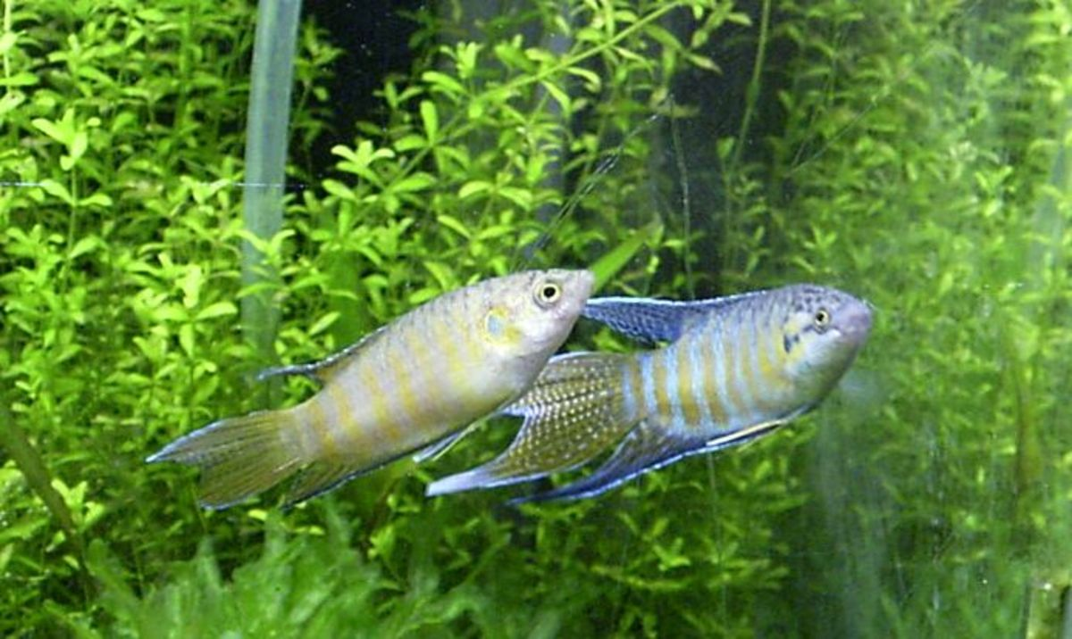 Live plants can help maintain a healthy environment for your fish.