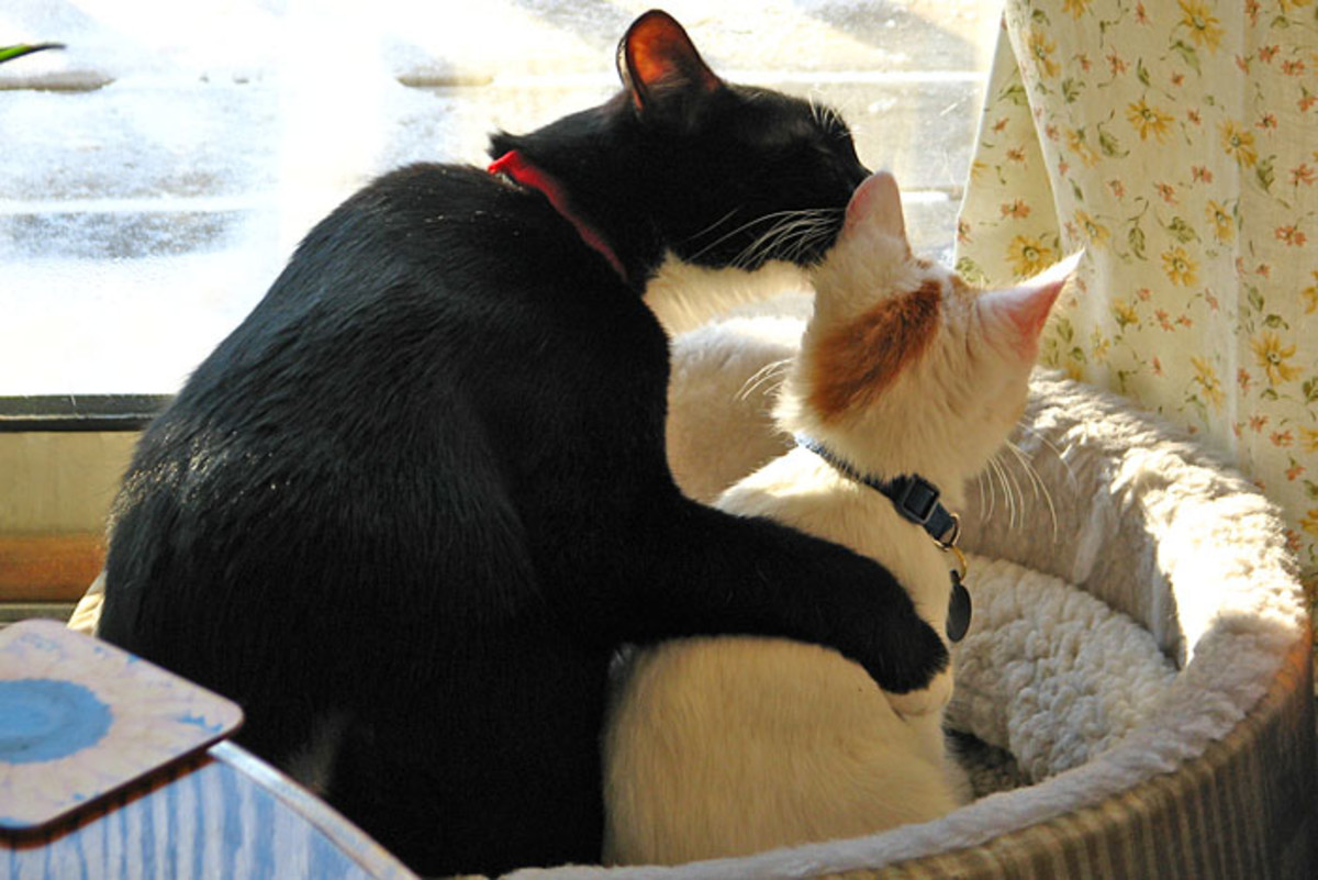 Cats are naturally clean animals.  So if your cat is smelling bad, there is likely a problem.