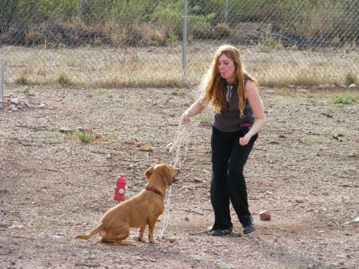 Conditioning your dog to the sound.